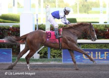 Shackleford (KY) in the Fountain of Youth Stakes at Gulfstream Park